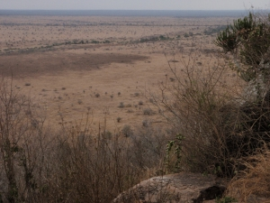Looking out at the savanna in Kruger National Park